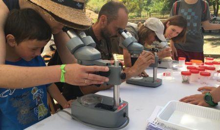 Bioblitz-Montserrat-Can-Macana-Insectes
