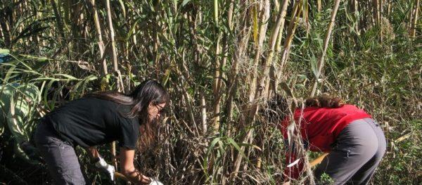Voluntariat ambiental amb l'Adenc al riu Ripoll