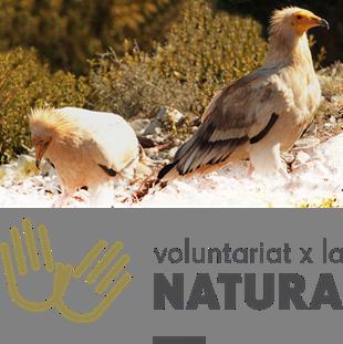 voluntariat a la Muntanya d'Alinyà