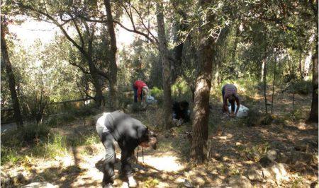 Voluntariat ambiental al Bosc de Turull