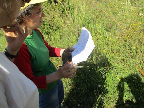 Voluntariat ambiental amb Depana