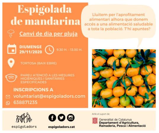 espigolada mandarines
