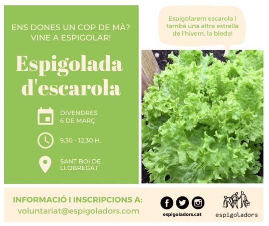 espigolada_escarola