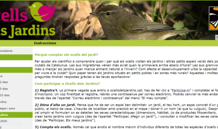 ico ocells de jardí tardor