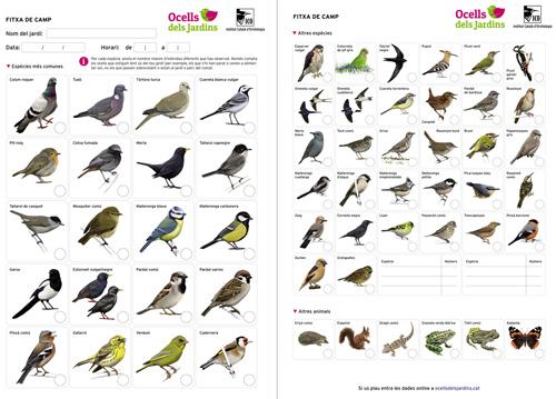 ocells de jardí fitxa