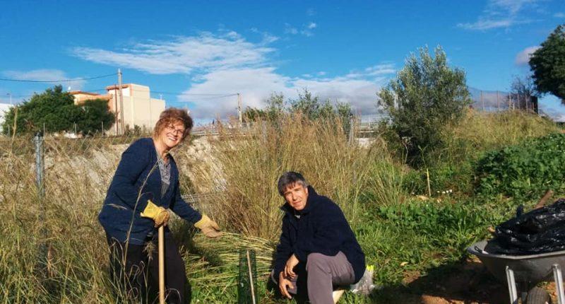 Voluntariat ambiental amb l'Ortoll