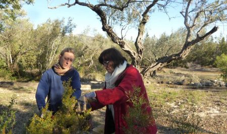 permacultura penyaflor