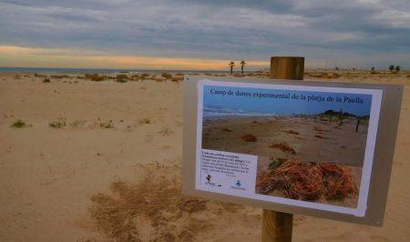 Voluntariat ambiental a la Platja de la Paella a Torredembarra