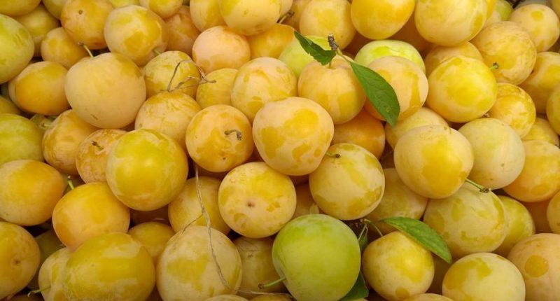 Espigolada de prunes