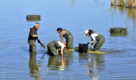 Voluntariat ambiental en la reserva ornitològica de Riet Vell amb SEO BirdLife