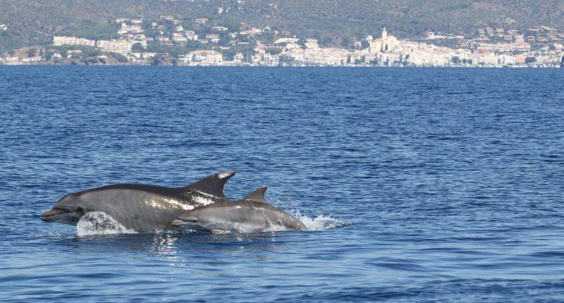 submon dofins costa