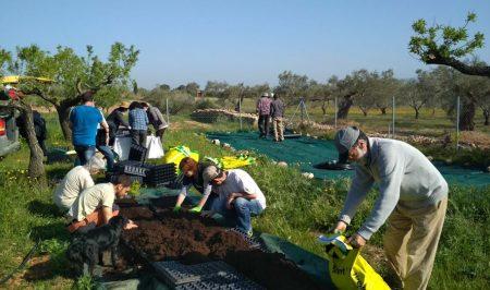Voluntaris de l'Associació de Voluntaris del Parc Natural del Delta de l'Ebre