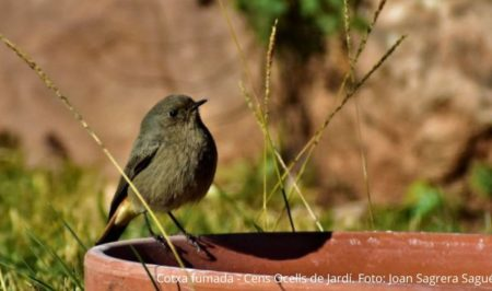 Cotxa Fumada Cens ocells de Jardí