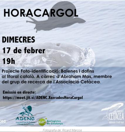 Hora Cargol dofins