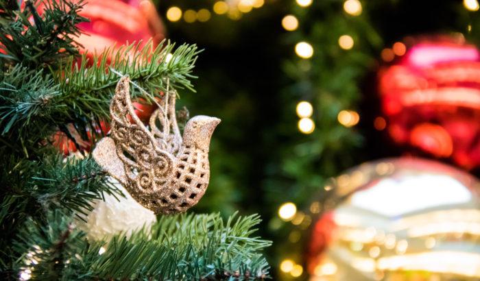Regals de Nadal Solidaris amb la natura_Donant ambiental