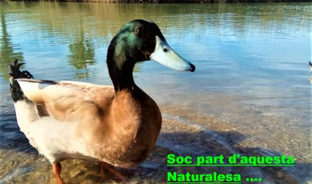 Waste Watch
