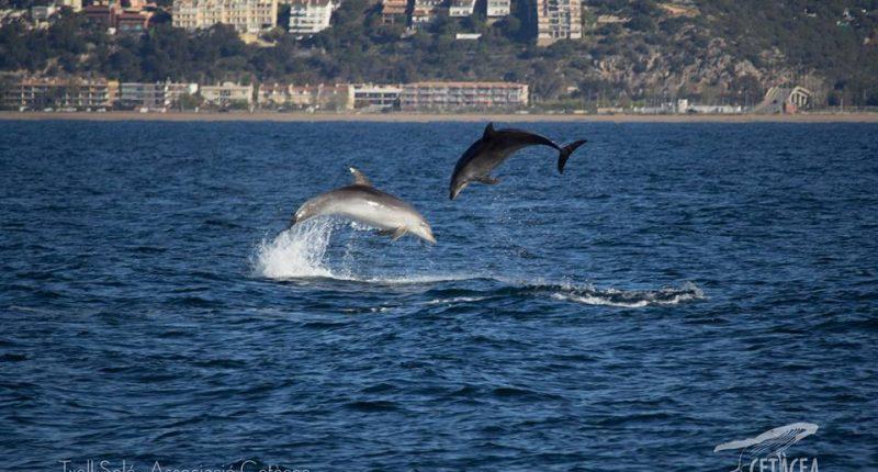 associació cetacea dofins