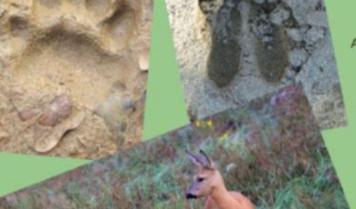 iaeden rastres de fauna