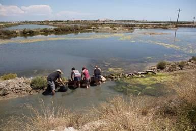 Voluntariat ambiental a la llacuna de la Tancada