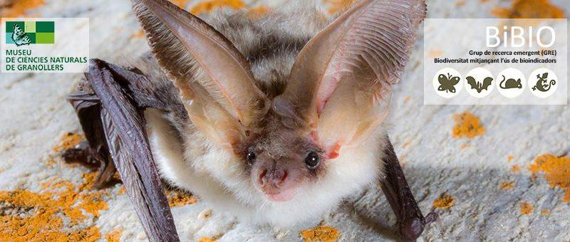 Ratpenats.org