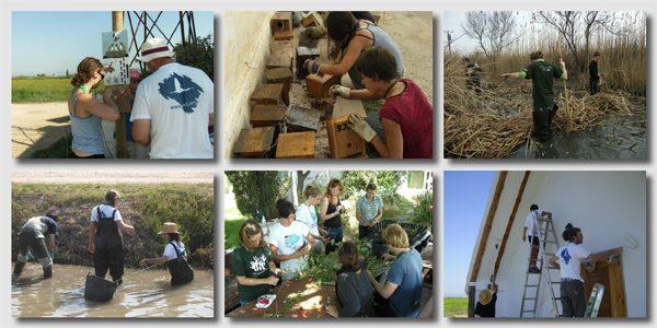 Voluntariat ambiental a Riet Vell