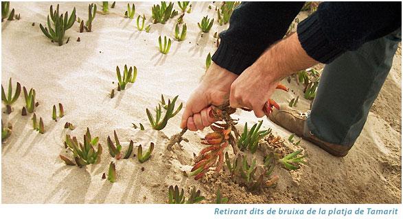 Voluntariat Ambiental amb l'Associació Mediambiental La Sínia