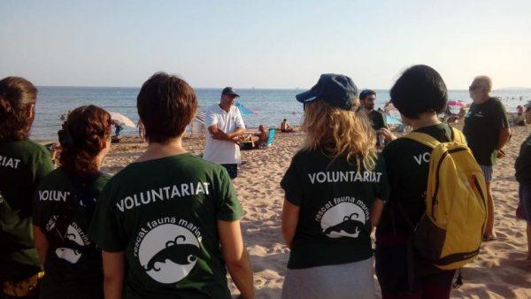 voluntariat per la tortuga babaua